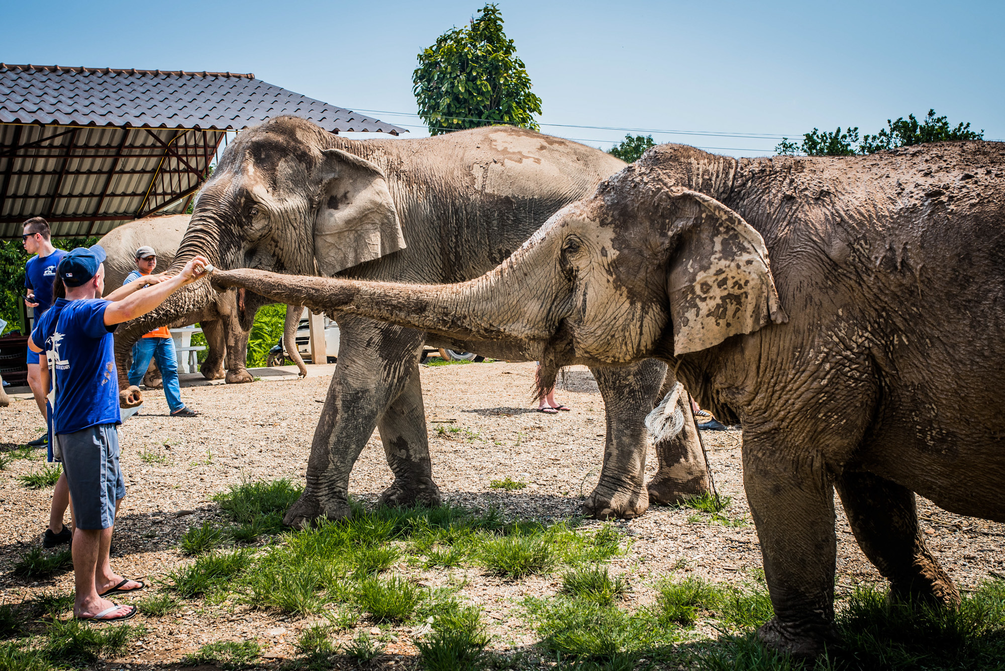 Odwiedzamy rezerwat słoni!